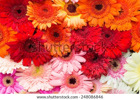 colourful  flowers in top view - stock photo