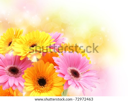 Colourful Gerbera daisies on a sparkly pastel background - stock photo
