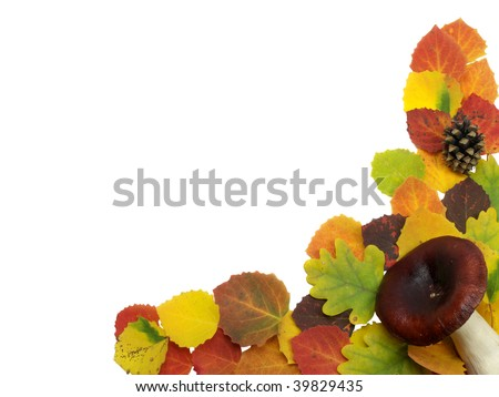 colourful leaves on a white background - stock photo