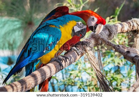 Colourful macaws sitting on the perch - stock photo