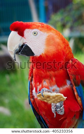 Colourful macaws sitting on the perch
