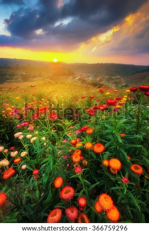 Colourful of paper flower field at sunset - stock photo