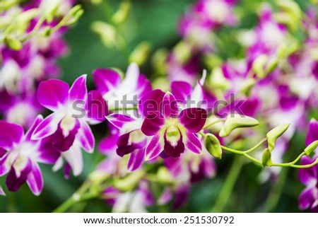 Colourful orchid flowers on bright summer day