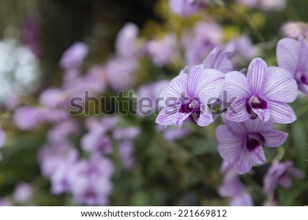 Colourful orchid flowers, shallow DOF. - stock photo