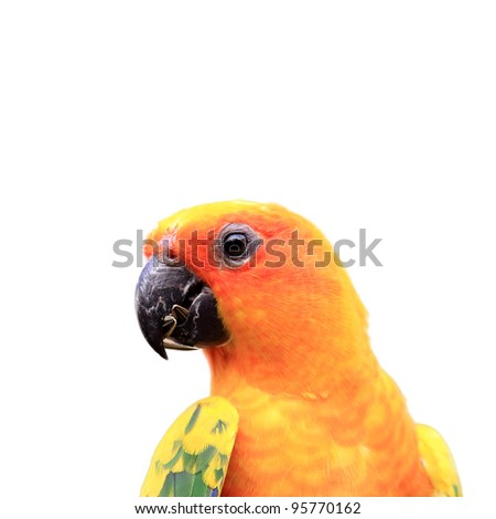 Colourful parrot bird on white background - stock photo