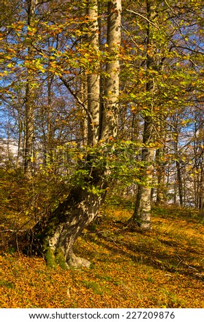 Colours of autumn in a forest at sunny day, Radocelo mountain, central Serbia - stock photo