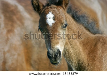 Colt standing next to mare in pasture - stock photo