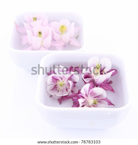 Columbine flowers floating in bowls on white background