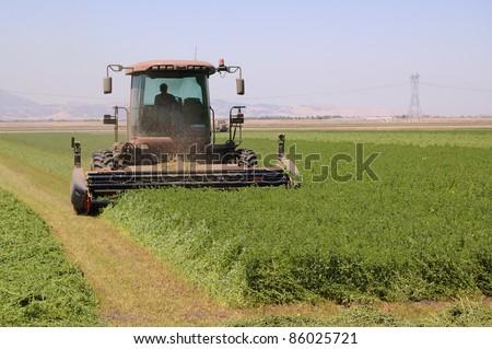 Combine harvester cutting a field of alfalfa - stock photo