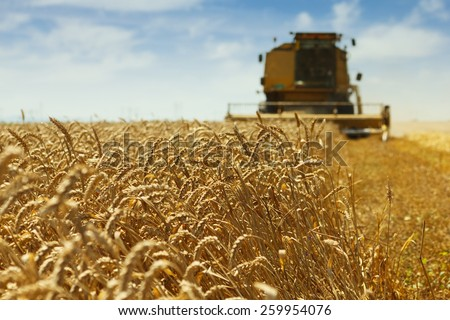 Combine harvester harvesting wheat . - stock photo