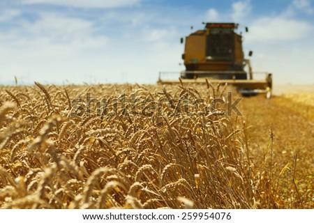 Combine harvester harvesting wheat . - stock photo
