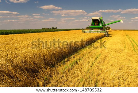 Combine harvester harvesting wheat on sunny summer day. - stock photo