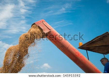 combine harvester unloading grain wheat - stock photo