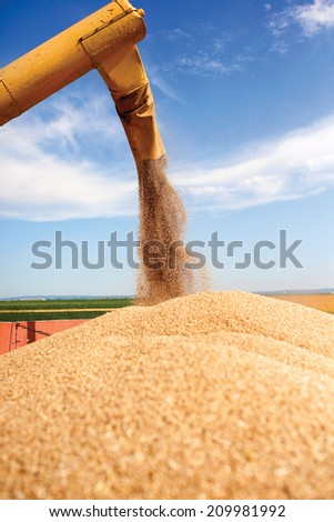 Combine harvester unloads wheat grain into the tractor trailer - stock photo