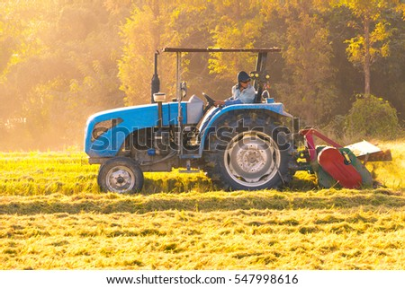 combine harvester working in ripe rice field near forest