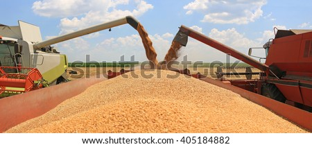 Combine harvesters transferring freshly harvested wheat to tractor-trailer for transport - stock photo