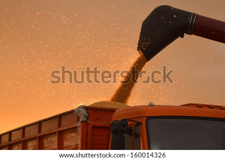 Combine harvesting corn on summer or autumn afternoon industry details - stock photo