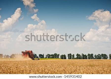 Combine harvesting wheat on field - stock photo