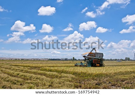 combine machine harvesting in rice field - crop agriculture farm gold technology straw dry blue farmer - stock photo