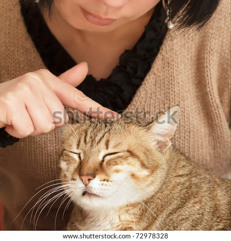 Comfortable expression on cute cat when being touched. - stock photo