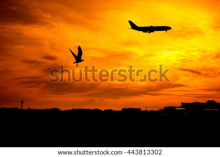 commercial airplane and bird over sunset
