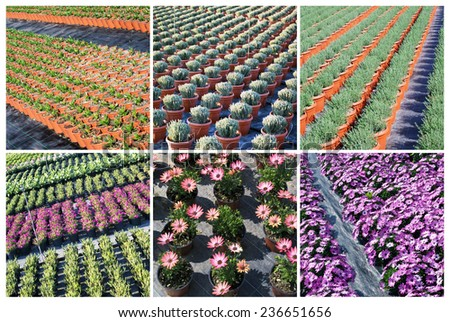 Commercial plants growing in greenhouse - stock photo