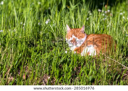 Common domestic cat lying in the grass - stock photo