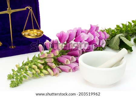 Common foxglove with precision scales over white background - stock photo