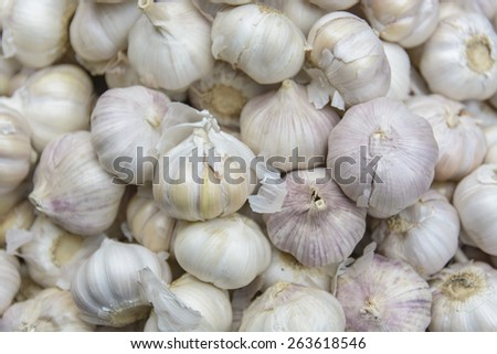 Common Garlic, Allium ,Garlic, Allium sativum L.