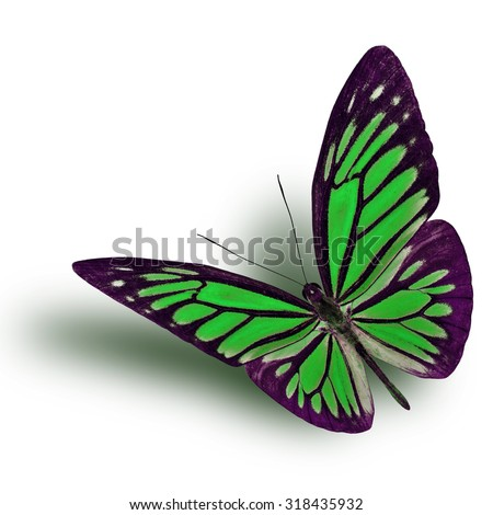Common Wanderer (Pareronia anais) the beautiful flying green butterfly on white background with soft shadow beneath - stock photo