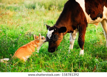 communication, conversation, care between dog and calf - stock photo