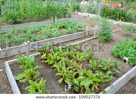 Community allotment garden with vegetables - stock photo