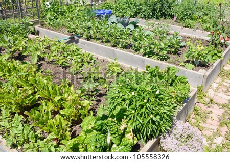 Community Allotment gardens in early summer - stock photo