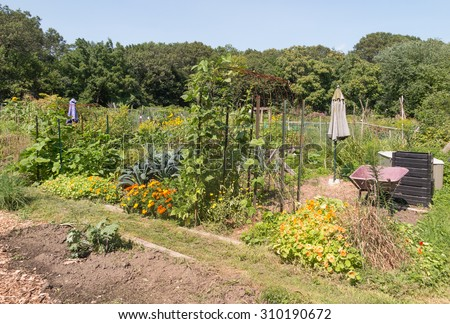 community allotment gardens in summer