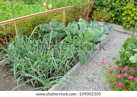 Community allotment gardens with vegetables
