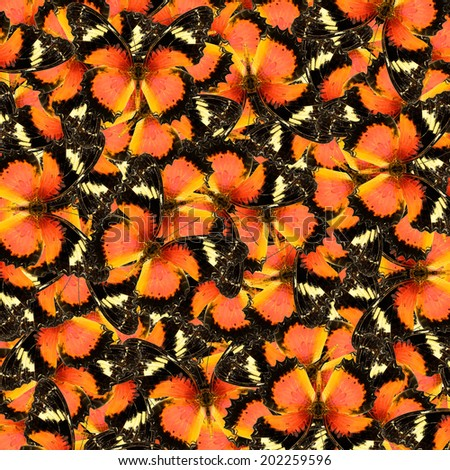 Compilation of Leopard Lacewing butterfly in a beautiful background texture(Cethosia cyane)  - stock photo