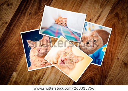 Composite empty photo frame with four cat photos - stock photo