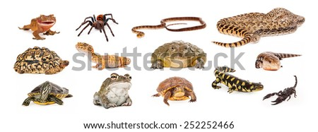 Composite of exotic pets including geckos, tarantula, snakes, turtles, toads, salamander, skink and scorpion - stock photo