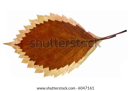 Composition from autumn leaves