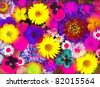 Composition from summer flowers - stock photo