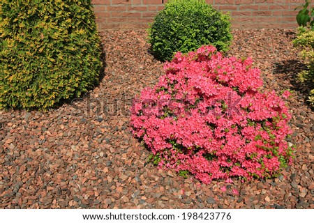 composition garden with rhododendrons - stock photo