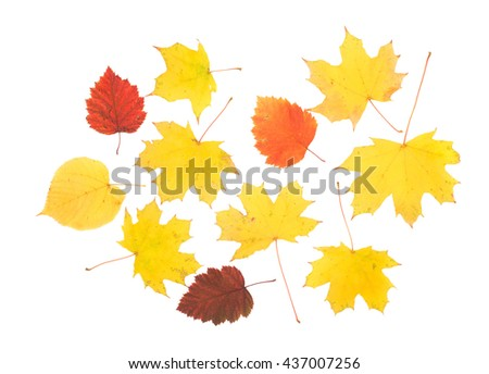 Composition of autumn leaves. Leaves are on the white background.