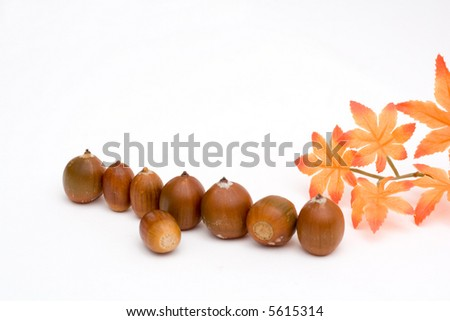 composition of brown acorns isolated on white