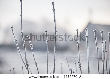 Composition of frozen small branches with buds and old farm house in background with a low depth of field in winter - stock photo