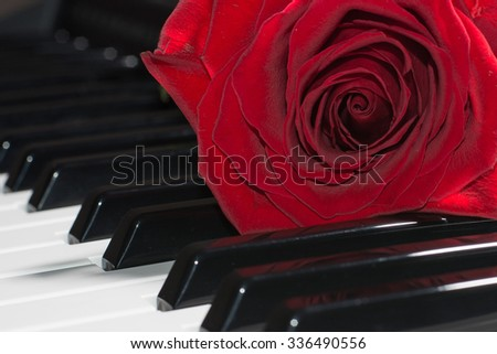 Composition of red rose on piano keys