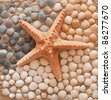 Composition of starfish and shells on the beach - stock photo