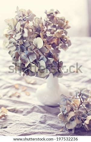 composition with a purple dried  hydrangea flowers  in a vase.  - stock photo