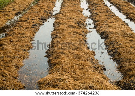 Organic fertilizer stock images royalty free images for Organic compost soil