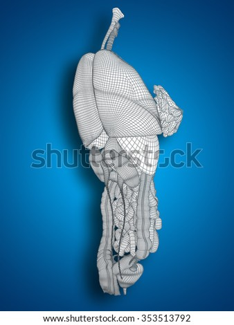 Concept conceptual anatomical human woman 3D black wireframe mesh digestive system on blue background  for anatomy, medical, body, stomach, medicine, heart, biology, internal, care or digest - stock photo