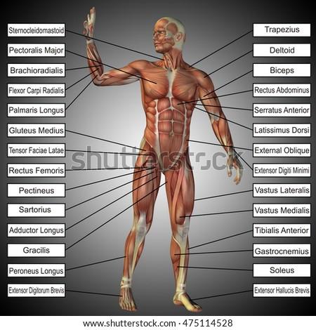 Concept 3 D Illustration Male Human Anatomy Stock Illustration